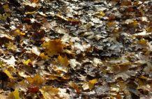 Az ősz kiteljesítő ereje