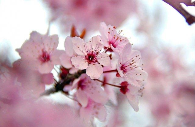 Tavasz, te gyönyörű!