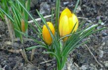 Itt a tavaszi megújulás ideje!