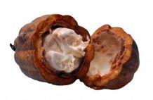 Kakaóvaj (Theobroma cacao)