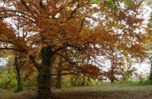 Az őszi táj, mint belső alakulásaink színtere